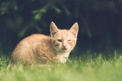 โรคอันตรายในแมวที่ไม่ควรมองข้าม ทาสแมวมือใหม่ควรทำความเข้าใจไว้นะ