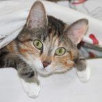 หูน้องแมวกำลังบอกอะไรเรา