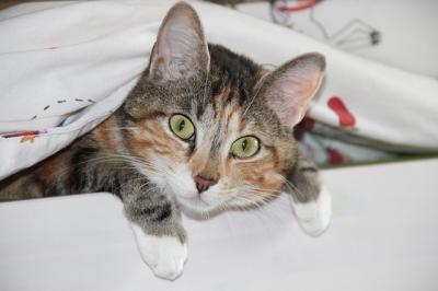 หูน้องแมวกำลังบอกอะไรเรานะ