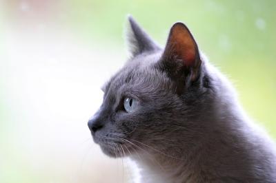 เรื่องที่ต้องรู้ ! สำหรับทาสแมวมือใหม่ต้องเรียนรู้และเตรียมการอะไรบ้างไปดูกันเลย!